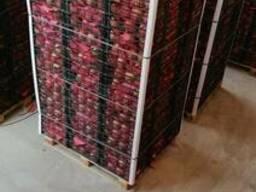 Pomegranates - photo 3