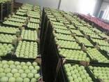 Apples fresh - photo 1