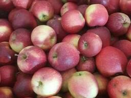 Apples fresh - photo 7