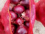 Лук красный - фото 1
