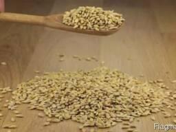Ячмень, Кукуруза - фото 2