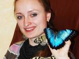 Живые бабочки - продажа готового бизнеса, франшиза. - фото 2